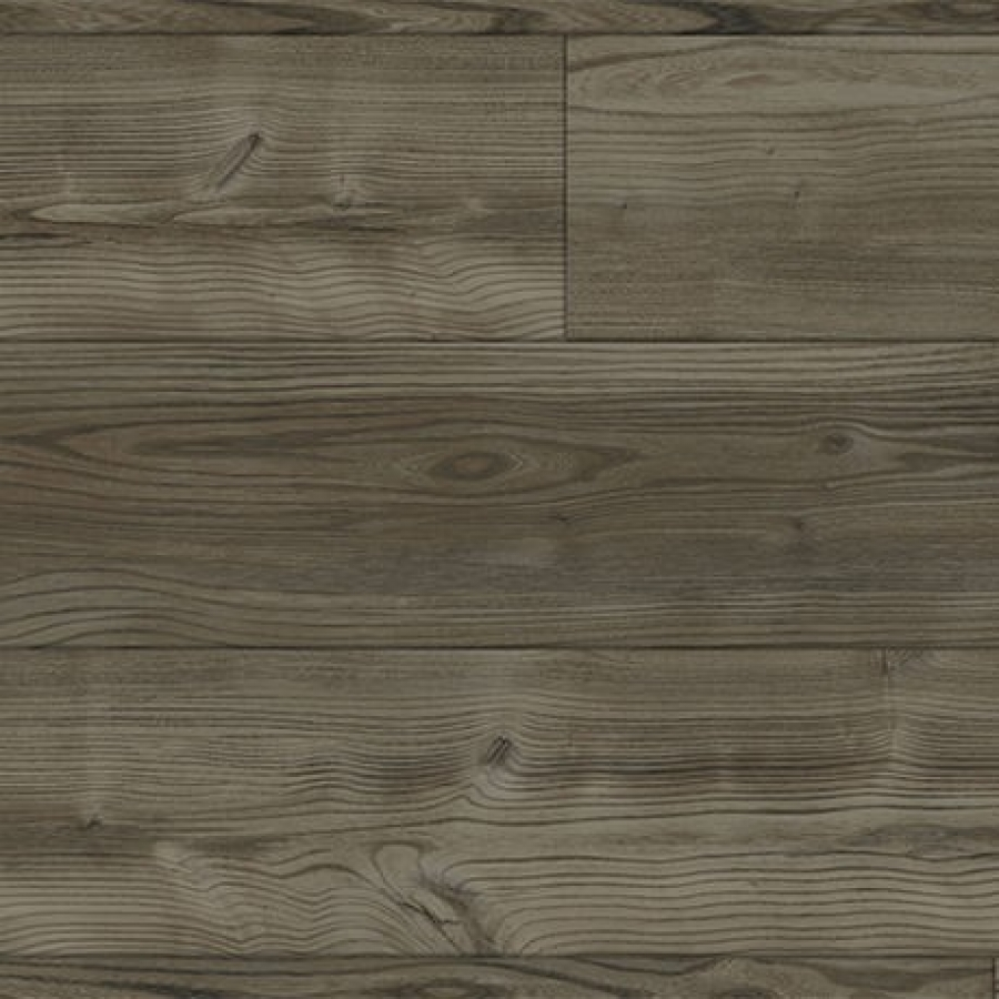 5362107 Melbourne Elm Pearl